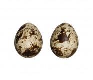 uova di quaglia 18 pz