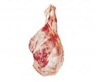 coscia di bov. adulto con osso europa lav.1