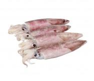 calamari sporchi 3p 10/15 10% iqf marocco c.